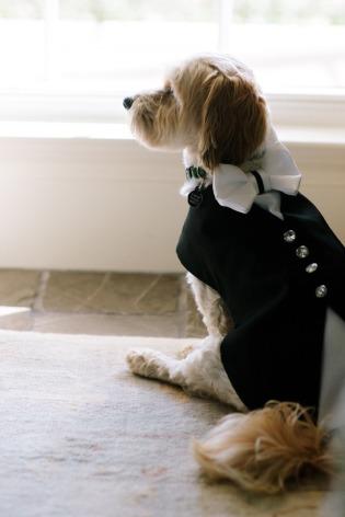 dressed-pet-mascota-vestido-boda-10