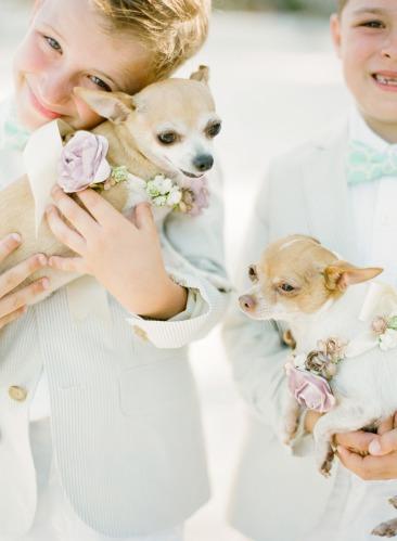 dressed-pet-mascota-vestido-boda-14
