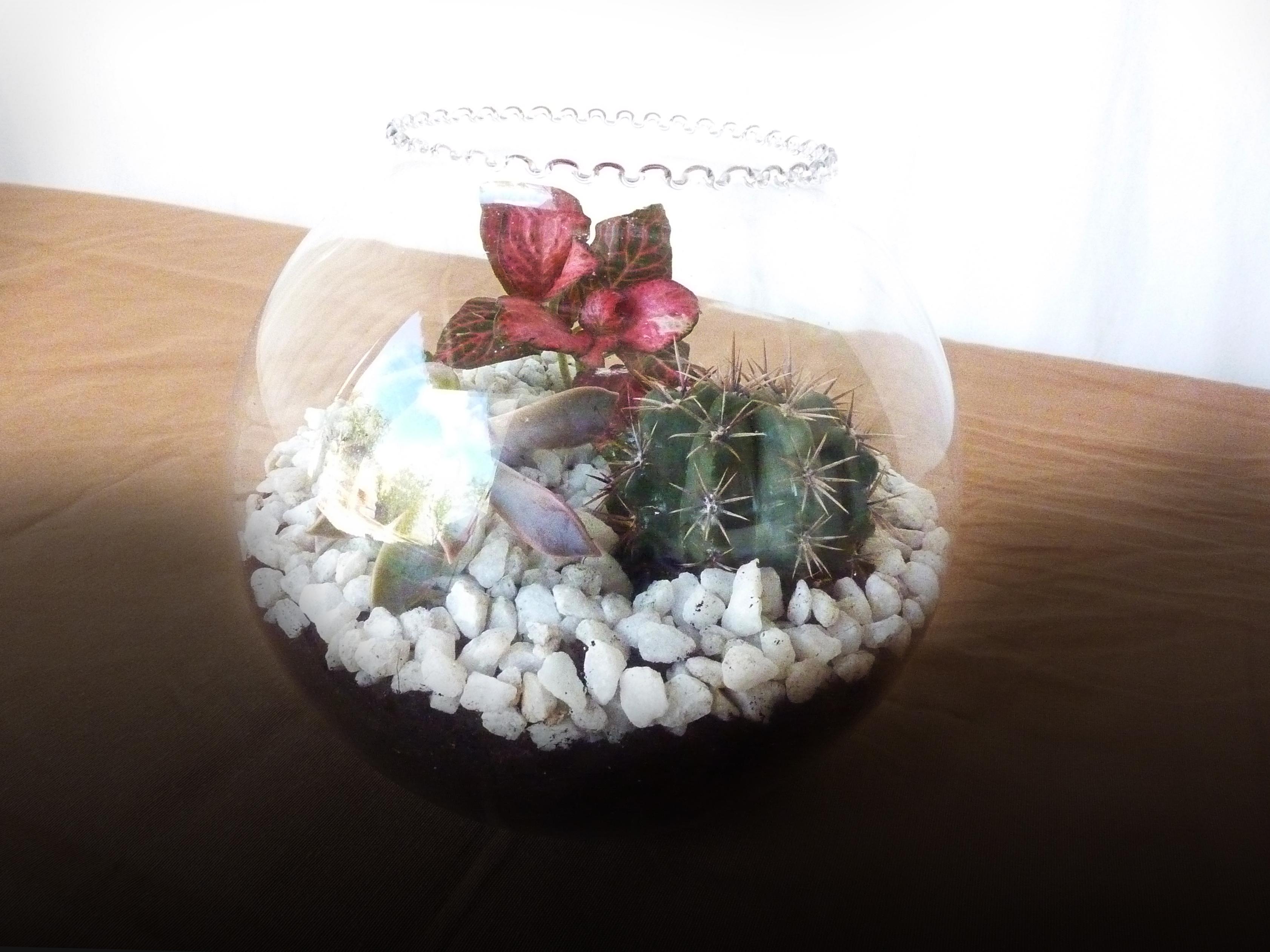 Decora tu hogar con un terrario para plantas luna babiana - Plantas para terrarios ...
